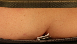 Rare espèce de raie pocheteau gris. Vous remarquerez la marque agrafée afin de pouvoir la suivre et l'identifier lors de ses migrations.